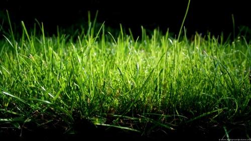 grass_dark_wallpaper-HD