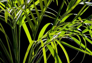 grass_night_leaves_14850_preview