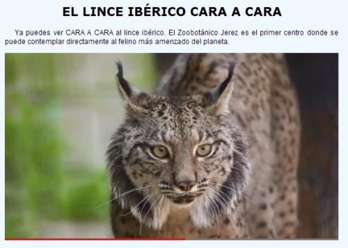 lynx cara