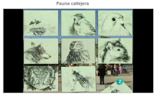 Fauna callejera
